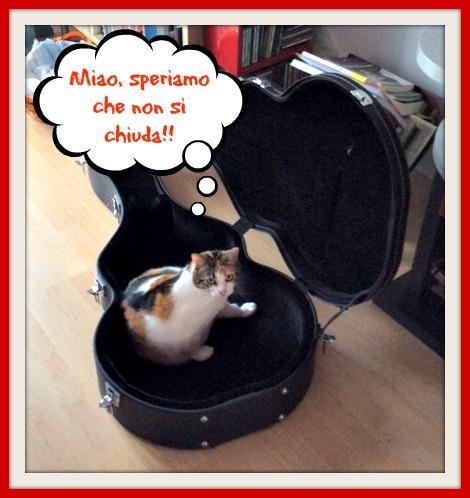 La gatta Pulce e i suoi strani nascondigli!