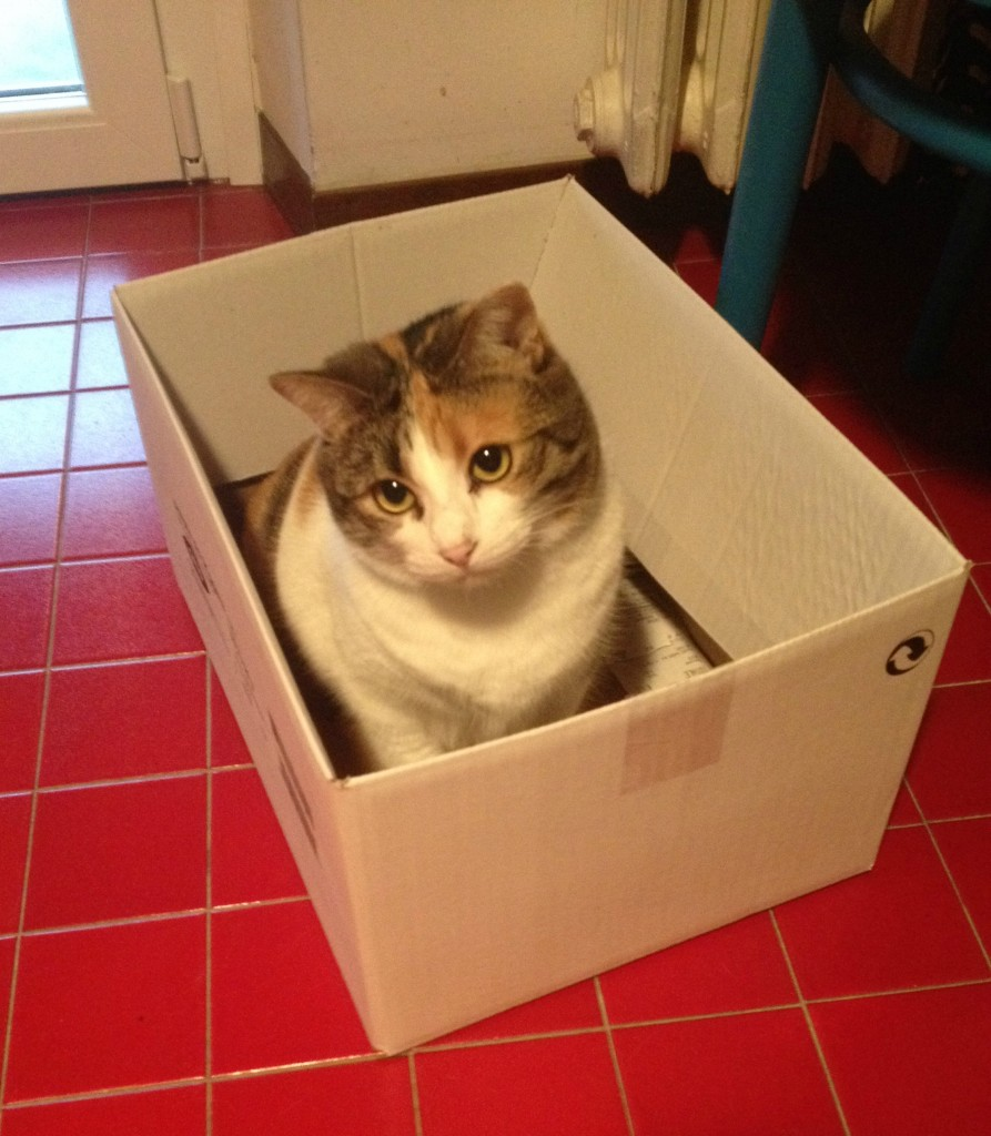 Pulce: massima specialista nei giochi a misura di gatto!
