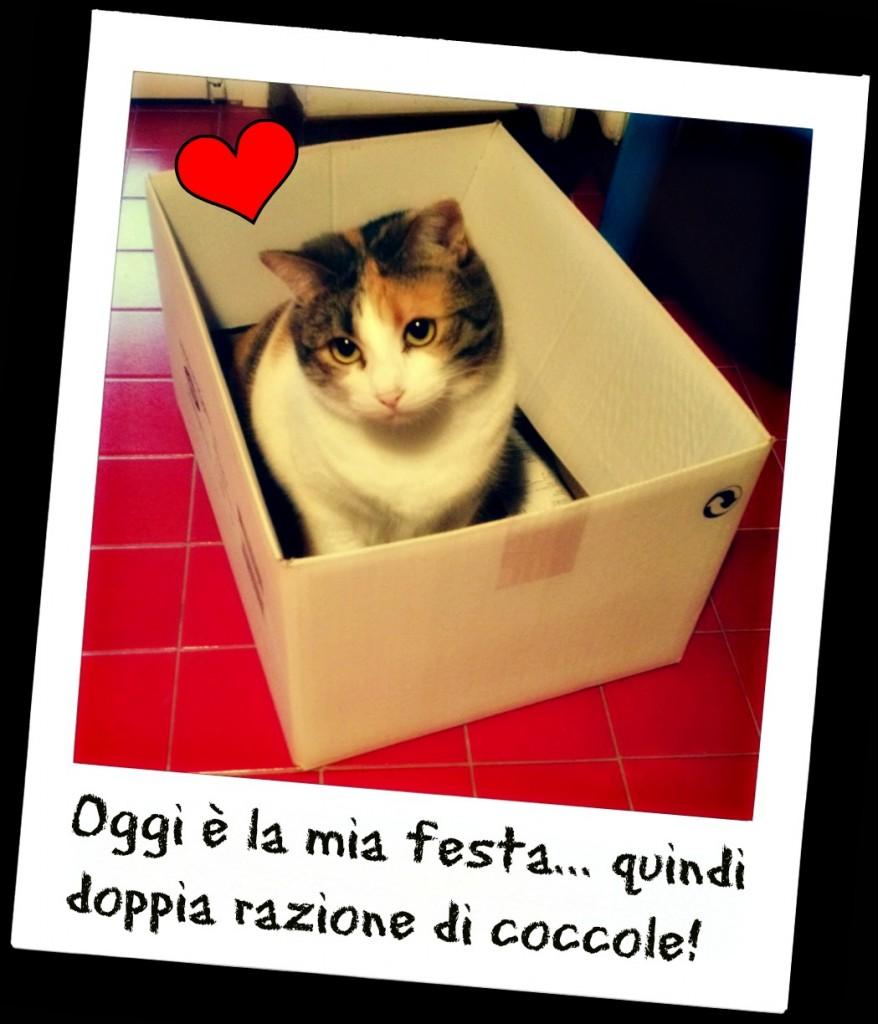 17 febbraio: giornata internazionale del gatto