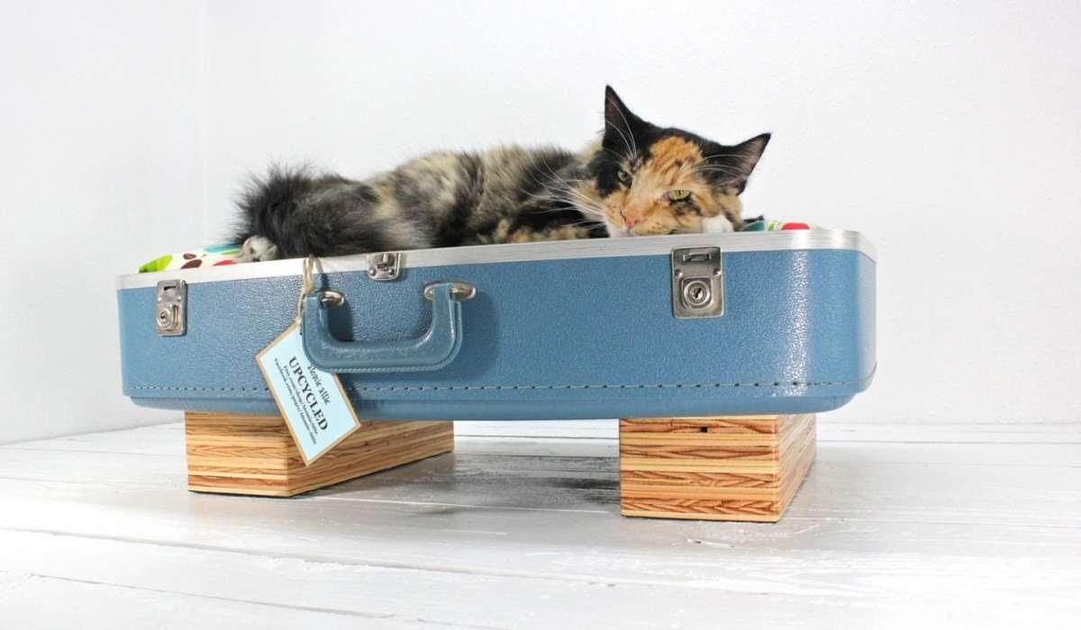 Cuccia Gatto Fai Da Te 3 cucce fai da te per cani e gatti - pet's planet blog - news